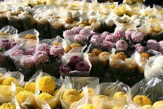 Paris, Monceau Fleur, Chrysanthèmes, (c) Yves TRAYNARD 2005