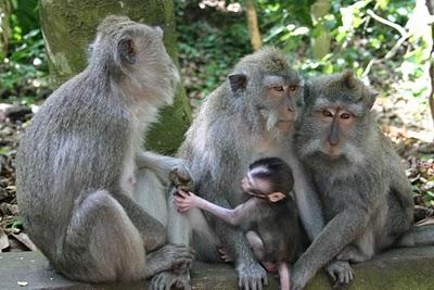 Ubud, Forêt sacrée des singes (c) Yves Traynard 2007