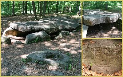 Forêt de Carnelle, Saint-Martin-en-Tertre, (c) Yves Traynard 2010