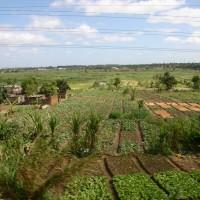 Urban Farming in Africa