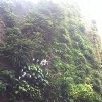 Rainforest...
