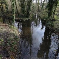 Marais de l'Essonne autour de Mennecy