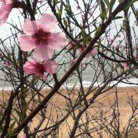 Troisième printemps