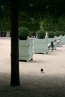Solitude au Palais Royal
